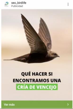 lead-magnet-test-seo-birdlife-anuncio